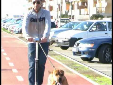 Cane da traino Orazio
