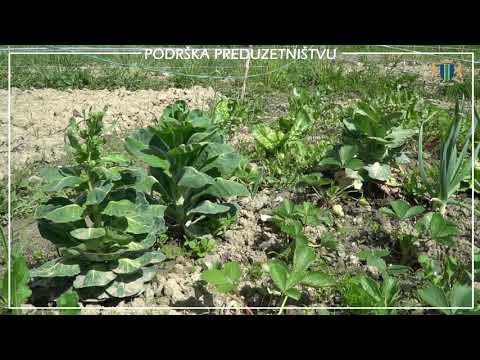 U Baru počeo razvoj socijalnih bašti - Zapuštena zemljišta postaju poljoprivredne površine (VIDEO)