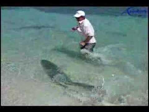 Russo che pesca in 3.6 Isola di Wrangel mnogoigly kerchak