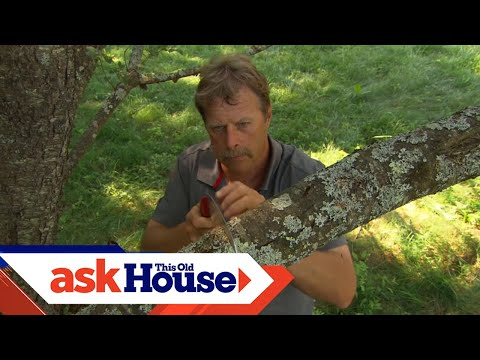 The Safe Way To Prune A Branch Without Damaging The Tree