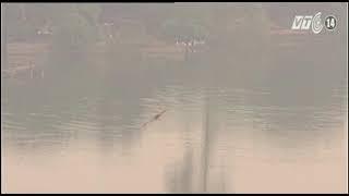 VTC14_Thiên nhiên VN_Chi Lăng Nam - mùa chim về tổ