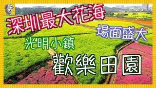 【深圳好去處】光明小鎮.歡樂田園 花海.油菜花.向日葵 [4K][字幕]