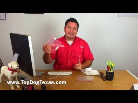 Diabetic Alert Dog Training: How to collect saliva samples for ...