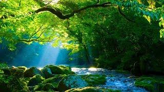 Música Relaxante Harpa e Natureza - Sinta-se no Paraíso - Acalmar e Meditar