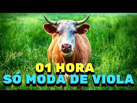 01 HORA DE MODA DE VIOLA SÓ MODA DE VIOLA Com nome da moda e artista