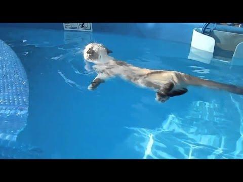 Katze schwimmt gerne
