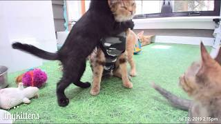 Eternity gets a weansie, hijinks ensue - TinyKittens.com