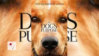 "PETA Calls for Boycott of the film ""A Dog's Purpose"""