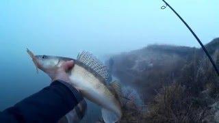 Ловля на отводной поводок с берега поздней осенью