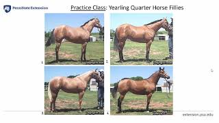 3 - (Part 2) Judging Halter - PA 4-H Equine Knowledge Contest