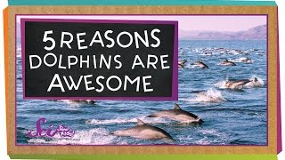 5 Reasons Why Dolphins Are Awesome