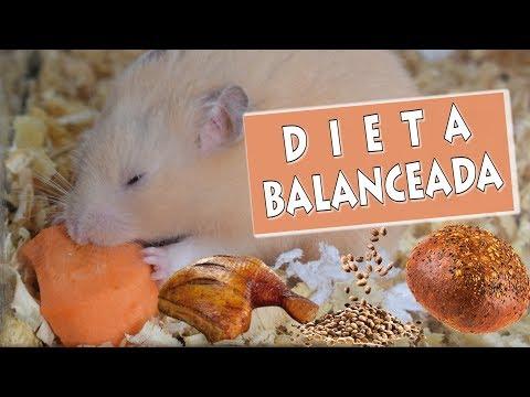 La alimentación del hamster   Que comen los hamster?