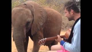 Damon Albarn canta para un elefante (Mr. Tembo)