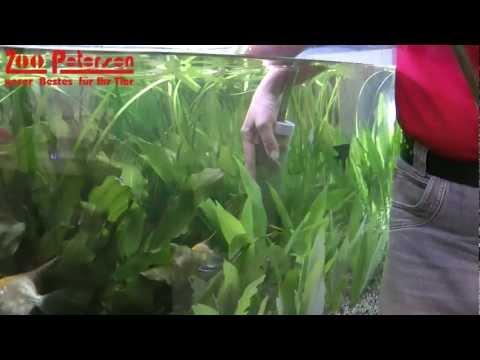 Der Tipp gegen Algen im Aquarium - Zoo Petersen in Schleswig