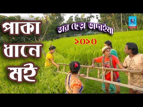 পাকা ধানে মই | Paka Dhane Moi | Tar Chera Vadaima | তারছেড়া ভাদাইমা | Bangla New Comedy Koutuk 2020