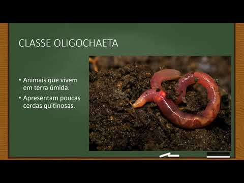 A bufo regulais parazitái