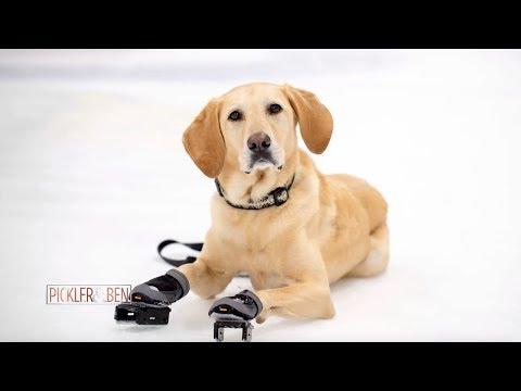 Meet Benny the Ice Skating Dog! - Pickler and Ben