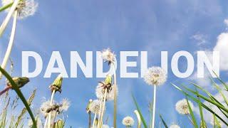 Dandelions vs. FPV drone    slow mo