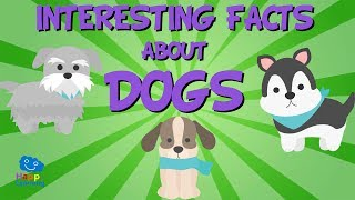 Interesting Facts About Dogs | Educational Video For Kids.
