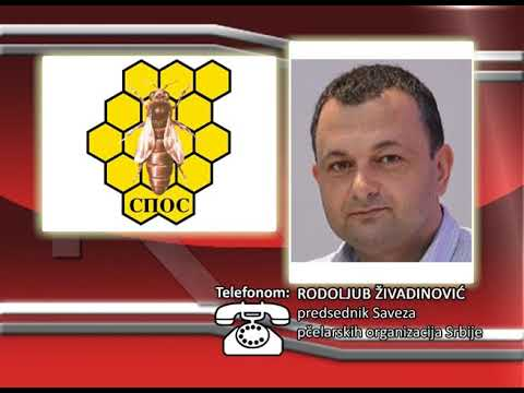FONO:  Rodoljub Živadinović - Pčelarstvo u Srbiji