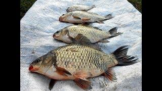 Как рыбалка на озере сунгуль челябинская область