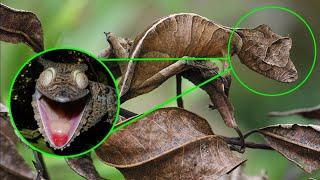 जिंदा रहने का जानवरो का ऐसा तरीका कही नहीं देखा होगा। Top 5 Best Animal Camouflage in the World.