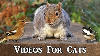 Videos for Cats to Watch : Bird Sounds Extravaganza