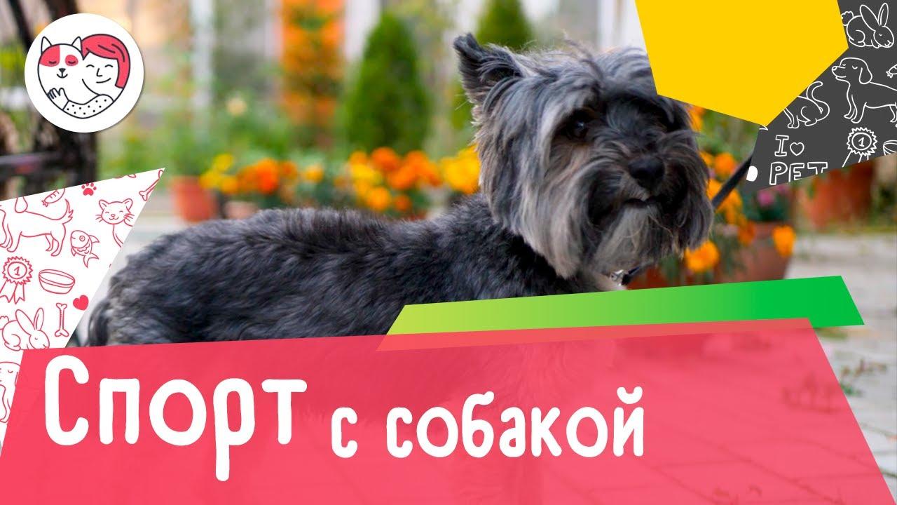 Как подготовиться к занятиям споротом с собакой: 6 сответов