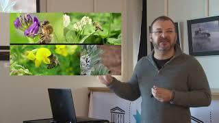 Conférence sur la biodiversité et les insectes pollinisateurs de Charlevoix pour l'organisme GUÊ
