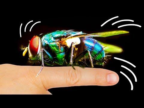 Por qué las moscas se sienten atraídas por tu cara