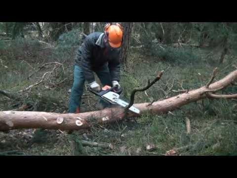 Stihl MS 211 Motorsäge, Kaltstart u. arbeiten am liegenden Holz, chainsaw cold start delimbing trees
