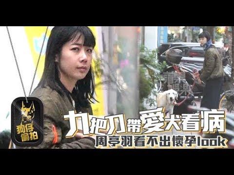 【狗仔偷拍】素顏妻周亭羽當跑腿 九把刀載癌犬送醫   蘋果娛樂   台灣蘋果日報