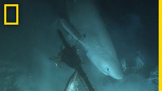 Shark Tagged From Submarine For First Time In History | National Geographic thumbnail