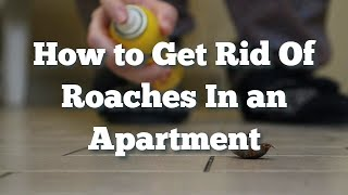 How to Get Rid Of Roaches In an Apartment - The Guardians Choice