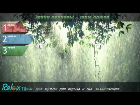 Звуки природы, слушать дождь, шум дождя, звук дождя, музыка дождя, лес дождь