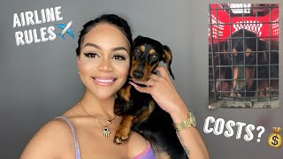 HOW I GOT MY DOG FROM ABROAD- STORYTIME: ALL THE DETAILS ON HOW TO BUY A DOG FROM ANOTHER COUNTRY