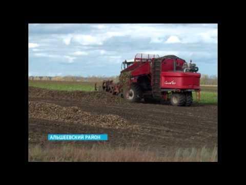 В Башкортостане идет уборка сахарной свёклы