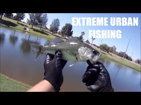POND FISHING FOR LARGEMOUTH BASS, CHANNEL CATFISH, AND COMMON CARP