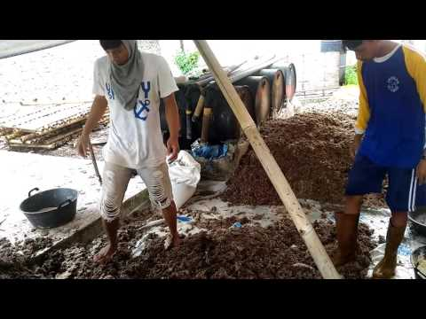 Video Pengomposan jamur merang