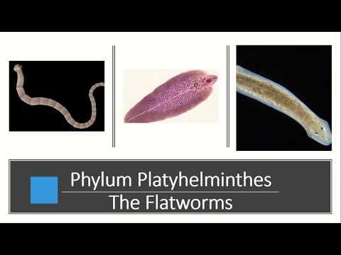 Mik a belső paraziták élőhelyének jellemzői