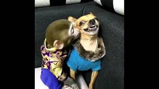 Baby Monkey 🐒 And Dog 🐶 Best Friends Ever