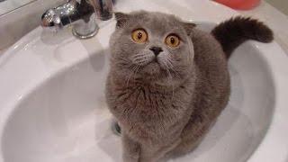 Животные! Юмор! Кошки играют с водой!