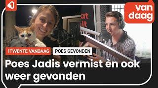 Hoe een vermiste poes in Enschede wordt teruggevonden