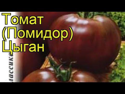 Томат Цыган (Томат). Краткий обзор, описание характеристик, где купить семена solánum lycopérsicum