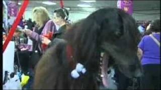 NY hosts record-breaking dog show