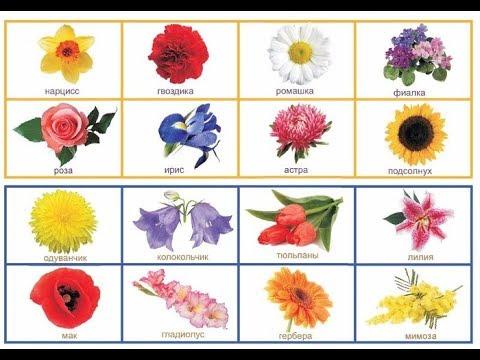 Названия цветов на русском языке. Загадки про цветы. Flowers names in Russian
