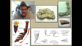 What are Cnidarians and what has their fossil record revealed about the history of life?