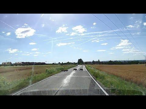 Navitel DVR R1000 ~ Slunečný den a stádo divočáků kříží cestu...