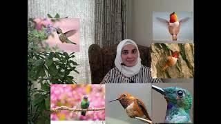 الحلقة الثامنة كاملة أعجب الطيور تحميل MP3