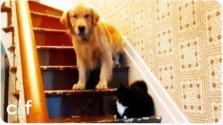"Dog Afraid of ""You Shall Not Pass"" Cat | Furry Gandalf"